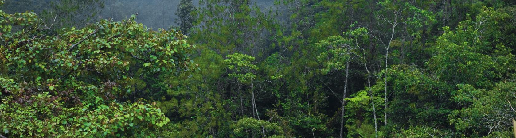 Projeto Painel Brasileiro de Biodiversidade (PainelBio)